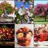 ยูโรเปี้ยน แครบ แอ๊ปเปิ้ล 5 เมล็ด/ชุด