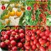 ชุดรวมมะเขือเทศเชอรี่หวาน - Sweet Cherry Tomato Collection