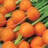 (Whole 1 Oz) แครอทกลม ปาริเซียน - Parisian Carrot