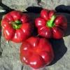 (Big Pack) พริกฟักทองหวาน - Red Pumpkin Pimento Pepper