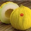 เมล่อน คาซาบา โกลเด้นบิ้วตี้ - Casaba Golden Beauty Melon