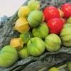 โทมาทิลโล่ สีเขียว - Green Tamatillo