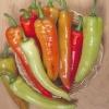 พริกฮังกาเรียน แวกซ์ - Hungarian Hot Wax Pepper