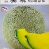 เมล่อน ไมเต้ - Maite Japanese Melon F1