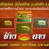 ช้างเสพนาง ตำหรับล้านนา ครูบาชัยมงคล วัดไทรย้อย