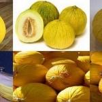 คาซาบา เมล่อน (Casaba Melon) 5 เมล็ด / ชุด