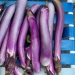 มะเขือม่วงยาวแคลิฟอร์เนีย - CA Long Purple Eggplant