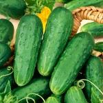 แตงกวา โฮมเมด พริคเคิล - Homemade Pickles Cucumber