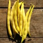 ถั่วแขกแชโรกี สีเหลือง - CHEROKEE WAX BEAN