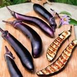 มะเขือยาวดำญี่ปุ่น - Japanese Long Black Eggplant