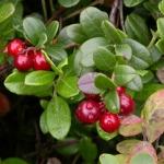 (Big Pack) แครนเบอรี่ - Cranberry