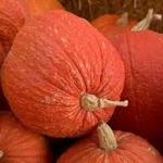 ฟักทองสีแดง - Red warty thing pumpkin