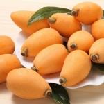 โลควอท - Loquat Fruit Tree