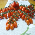 มะเขือเทศ พันธุ์เดทเทอริโน่ - Datterino Tomato