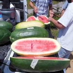 (Whole 1 Oz) แตงโมยักษ์ พันธุุ์คอนโก้ - Congo Giant Watermelon