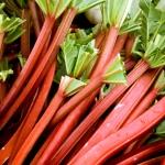 รูห์บาบ วิกตอเรีย - Rhubarb Victoria