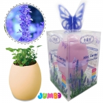 MN037 EGG MINI GARDEN JUMBOชุดของขวัญ ปลูกต้นไม้ Lavender (ลาเวนเดอร์)