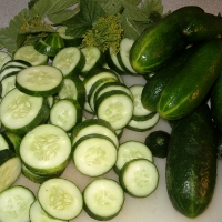 แตงกวา (Cucumber)
