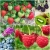 ผลไม้ - Fruit Seeds