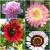 ดอกไม้ - Flower Seeds