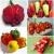 พริก - Pepper Seeds