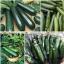 ฟักทองซูชินี่ แบล็คบิวตี้ - Black Beauty Zucchini Squash thumbnail 5