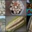 ข้าวโพดยักษ์ คุสโก้ 2 เมล็ด/ชุด thumbnail 1