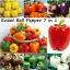 ชุดรวมพริกหวานใหญ่ - Sweet Pepper Set 7 in 1 thumbnail 1