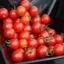 มะเขือเทศหวานสวีทแอพเพอริทิฟ - Sweet Aperitif Tomato F1 thumbnail 3