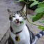 แคทนิป - Catnip Flower thumbnail 3