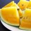 (Whole 1 Oz) แตงโมคิมสันเนื้อสีเหลือง - Yellow Crimson Watermelon thumbnail 2
