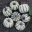 ฟักทองสวีทดัมลิ้ง - Sweet Dumpling Winter Squash thumbnail 1