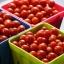 มะเขือเทศแคนดี้แลนด์ - Candyland Red Tomato F1 thumbnail 2