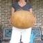 (Whole 1 Oz) น้ำเต้ายักษ์ - Giant Bushel Gourd thumbnail 3