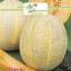 เมล่อน เฮลเบส จัมโบ้ - Hale's Best Jumbo Melon thumbnail 5