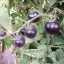 มะเขือเทศสีม่วง - Purple Tomato thumbnail 3
