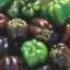 พริกหวานสีช็อคโกแลต - Chocolate Sweet Pepper thumbnail 4