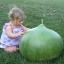 (Whole 1 Oz) น้ำเต้ายักษ์ - Giant Bushel Gourd thumbnail 2