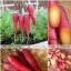 แครอทสีม่วง - COSMIC PURPLE CARROT thumbnail 3