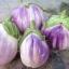 มะเขือยักษ์อิตาเลี่ยนสีชมพู - Pink Giant Italian Eggplant thumbnail 2