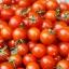 มะเขือเทศ เชอรี่สวีทตี้ - Cherry sweetie Tomato thumbnail 3