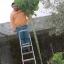 คะน้าต้นสูง - Portuguesa Kale Tree thumbnail 4