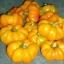 พริกฟักทองสีเหลือง - Yellow Pumpkin Pepper thumbnail 3