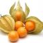 แคปกูสเบอรี่ - Cape gooseberry thumbnail 1