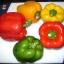 ชุดรวมพริกหวานใหญ่ - Sweet Pepper Set 7 in 1 thumbnail 3