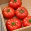 มะเขือเทศ มาร์แมนด์ - Marmande Tomato thumbnail 1