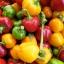 พริกหวานจิ๋ว สีเหลือง - Yellow Miniature Sweet Pepper thumbnail 2