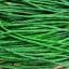 ถั่วฝักยาวใส้ตัน - Green Long Cowpea thumbnail 1