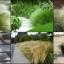 หญ้าเม็กซิกัน เฟทเธอร์ 10 เมล็ด/ชุด thumbnail 1
