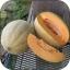 (Whole 1 Oz.) เมล่อน เฮลเบสจัมโบ้ - Hale's Best Jumbo Melon thumbnail 2